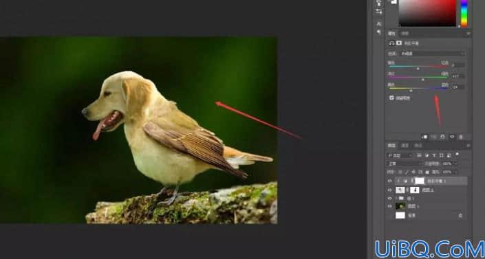 动物合成,合成一副鸟身狗头的趣味场景照片