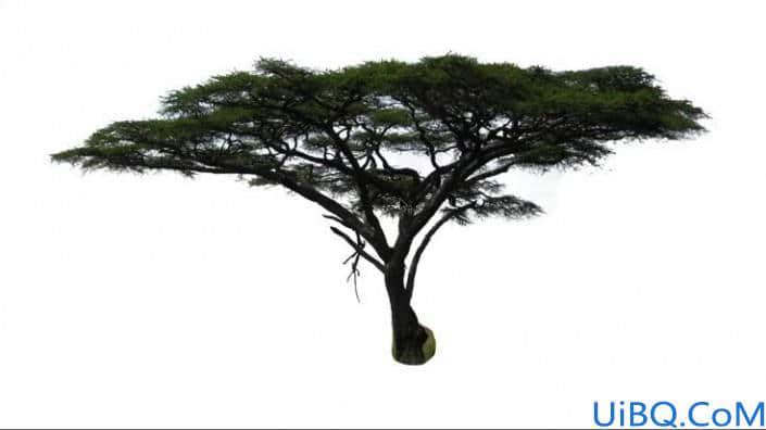 抠大树,用色彩范围抠出背景复杂的树