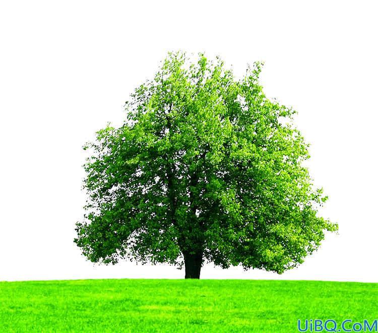 Photoshop抠图教程:使用通道工具快速抠出一棵大树素材图。