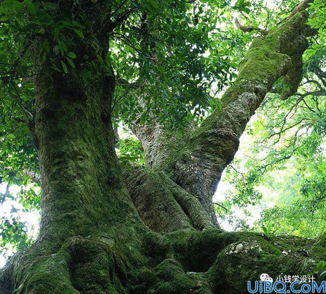 创意合成,制作合成人物古树成精效果